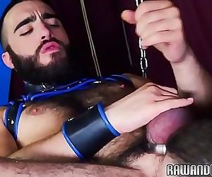 Cockhungry bear plowed raw..